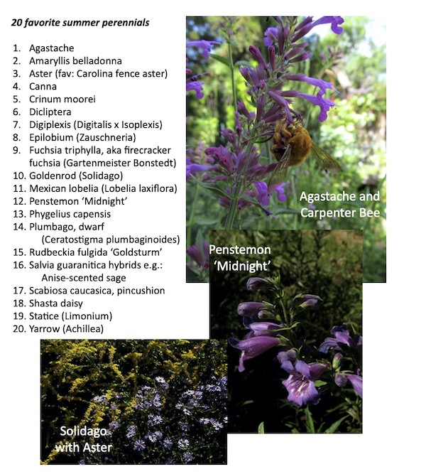 20 herbaceous fall-blooming plants