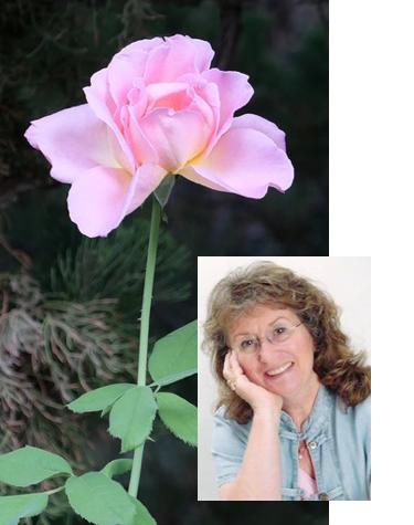 Gitane and her rose