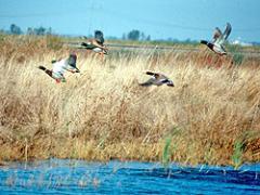 City of Davis Wetlands