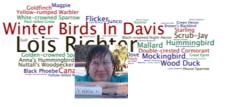 Birding Wordle + Lois