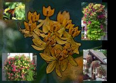 collage Milkweed and Hanging Baskets
