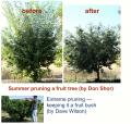 Summer Pruning