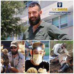 Dr Andrew Di Salvo wildlife veterinarian